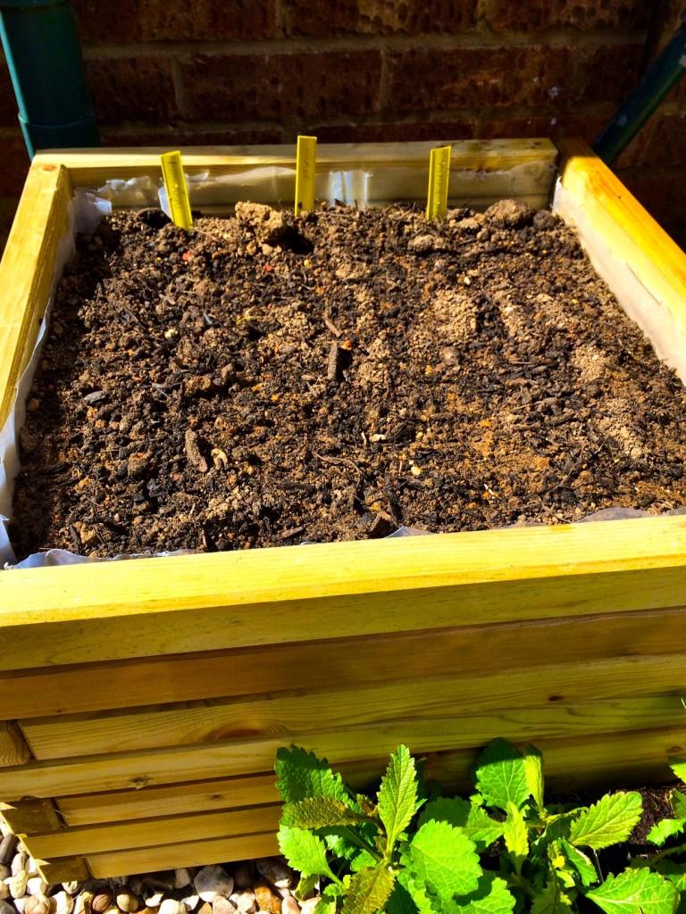 three rows of salad crops